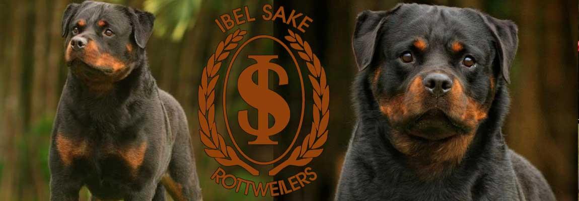 Canil Ibelsake - Rottweilers